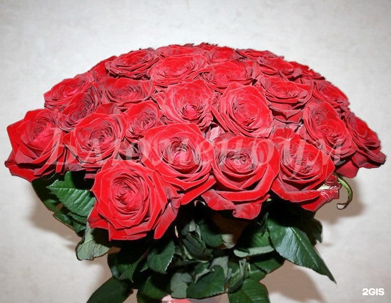 Заказ 55 роз набережные челны, цветов