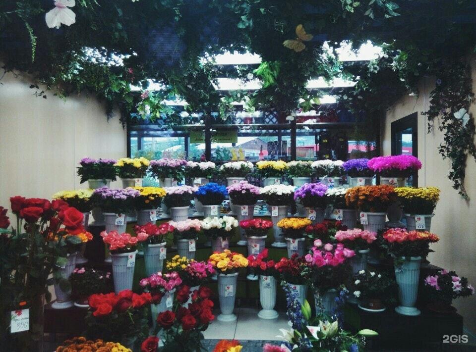 Москва магазин, цветы оптом улан-удэ крона