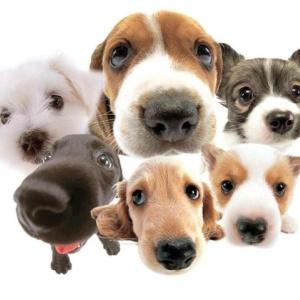 Фото от владельца Тамбовская городская станция по борьбе с болезнями животных
