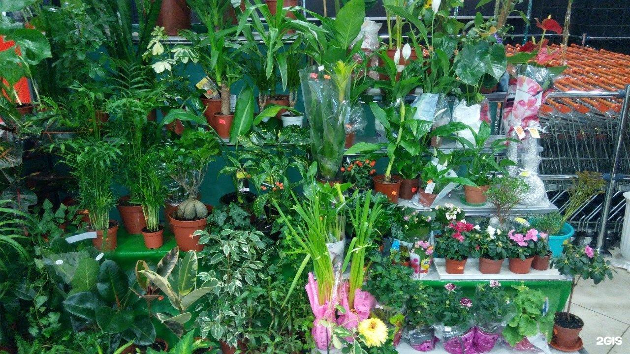 Магазин цветов в мурманске сайт